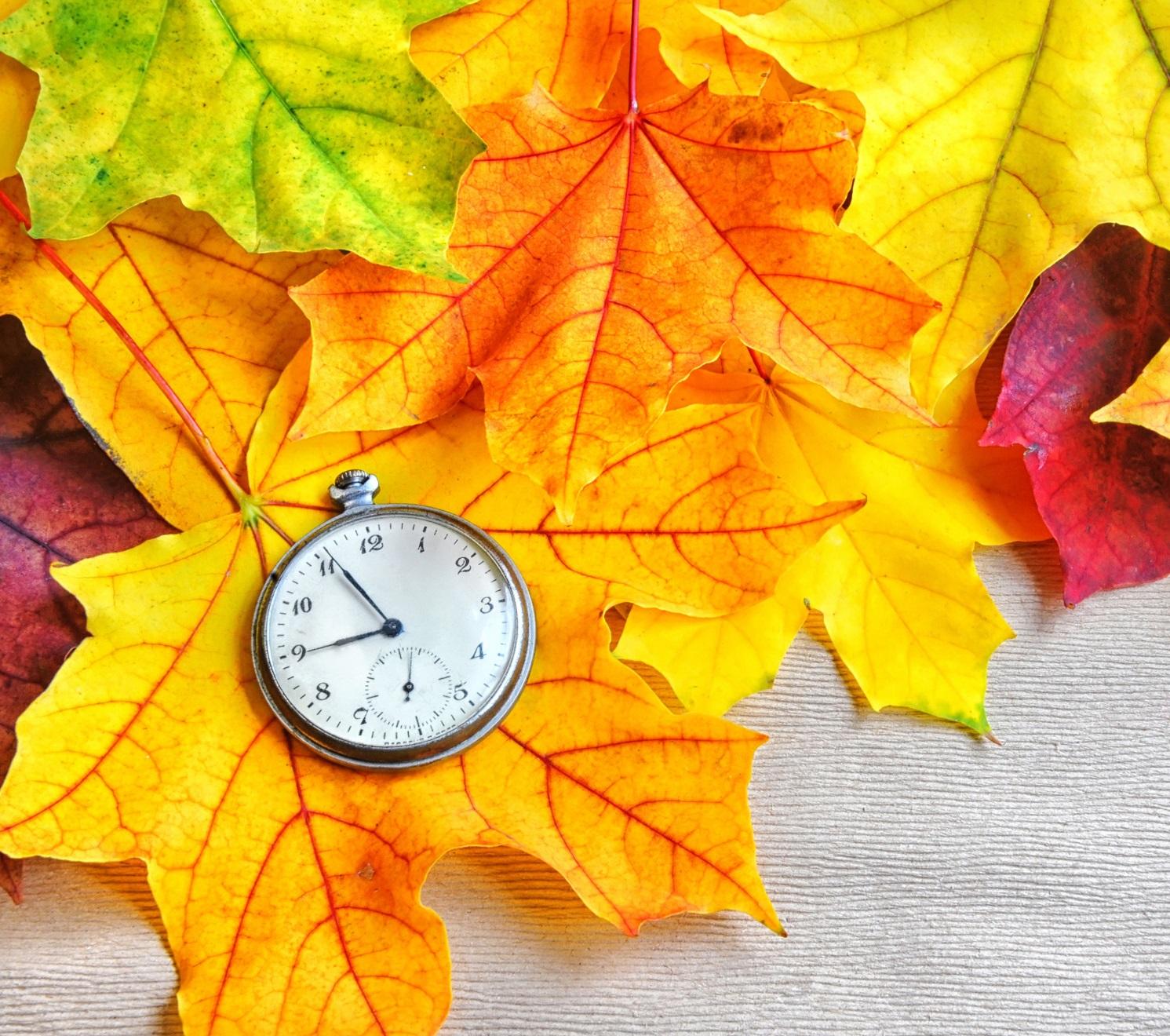 Листья опадают, осень к нам идет.